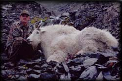 Lloyd Meineke of Bighorn, WY with his 13 year old Mountain Goat